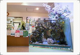 待合室の海水魚達